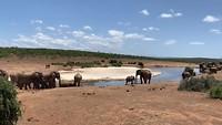 Circus olifant