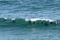Dolfijnen voor het huis