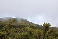 3000m boven zee-niveau, benaderen de boomgrens