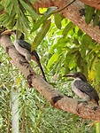 Vogels bij hotel