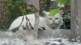 De kat van de dag in Bouilly.