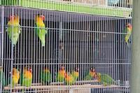 Vogeltjesmarkt