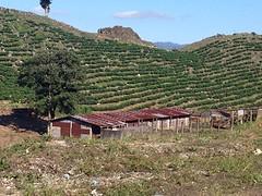 Het land van Maïs en koffie