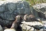 Otters, niet voeren. Wat hebben ze nu dan