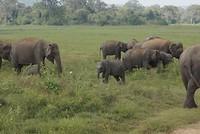 Baby-olifantje!