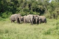 Groep olifanten