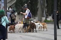 Meer honden aan de lijn houden is hier werk