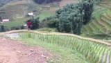 De rijstvelden bij Sapa