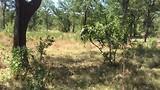 Een olifant in Liwonde National Park