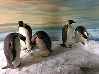 En last but not least, pinguïns. Ze bleven geweldig stilstaan. 😊