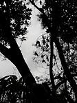 Hele grote vleermuizen in de Botanical Garden