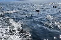 dolfijnen die mee zwommen
