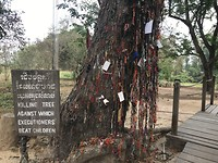 Killing Tree op Killing Fields