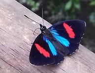Vlinder in tuin van camping