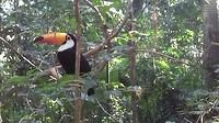 Toekan, Parque das Aves