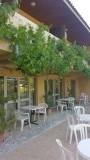 Druivenranken aan de balkons van de hotelkamers van hotel Acacias