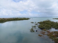 Rangitoto water