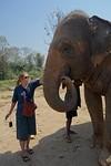 Chiang Mai olifant