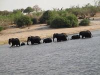 191009 Botswana B_0628