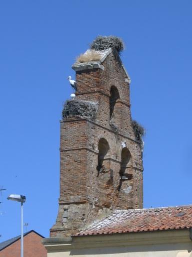 Kerktoren met nesten
