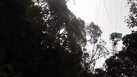 Tarzan swing Rylan