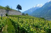 Aosta-vallei