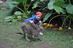 Knuffel eens een kangoeroe, deel 2