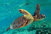 schildpadden marmaris