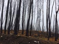 Stammetjes in de mist
