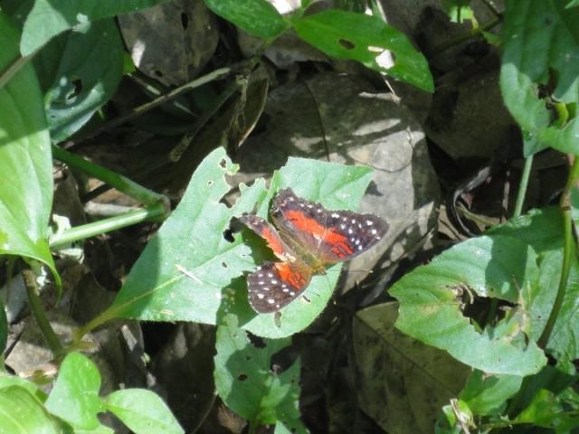 Peperpot Natuurpark, vlinders