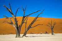Iconisch beeld van Nambie: de boom die alles zag....