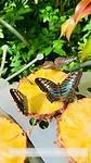 vlindertuin1