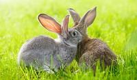 aanschaf-konijn-740x433