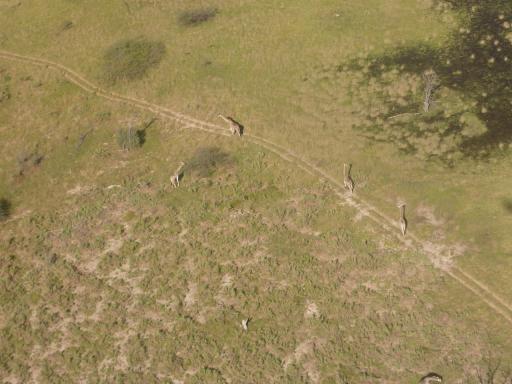 03 Okavango Delta 2 (1280x960)