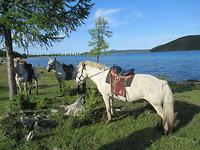 Schattige Mongoolse paardjes