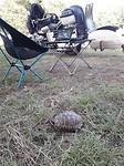 Schildpadje op bezoek
