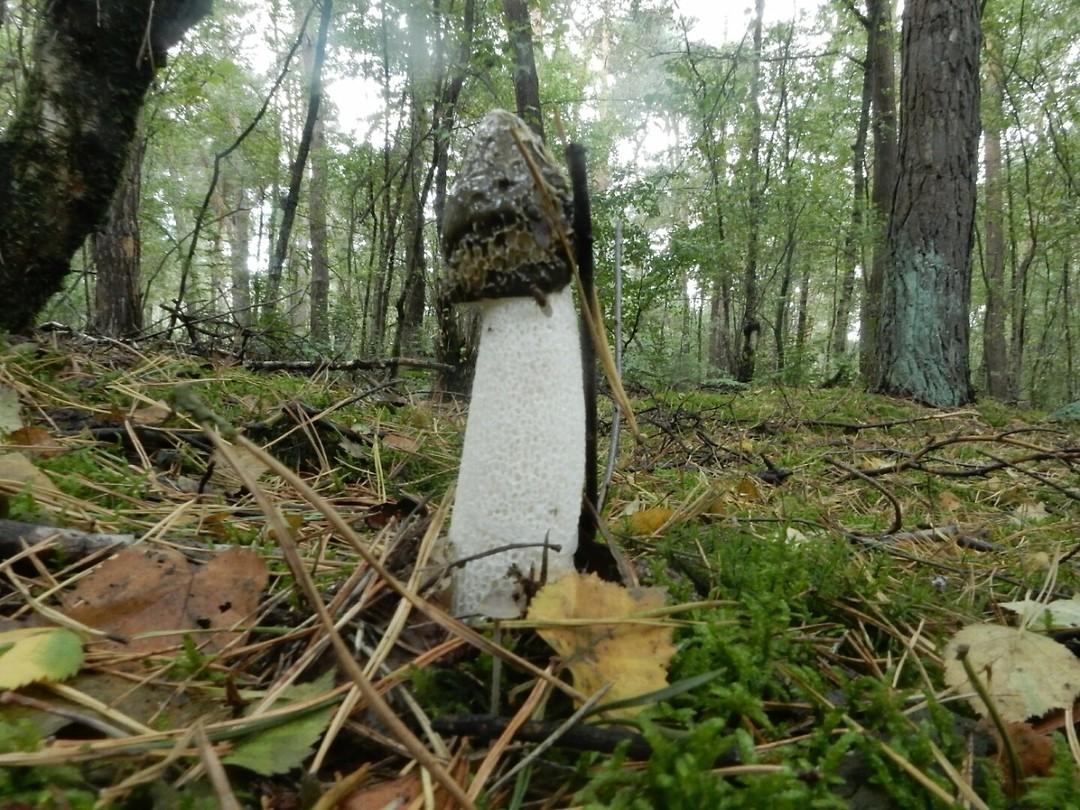 Op de wandeling maar een paar soorten paddenstoelen gezien (2)
