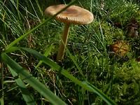 Op de wandeling maar een paar soorten paddenstoelen gezien (3)