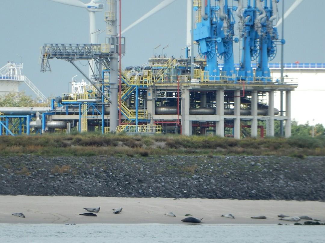 Toch nog een paar zeehondjes gespot