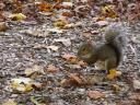 eekhoorntjes zie je heel veel!