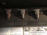 Dag 18 - Museum Reykjavik