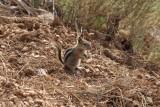 Litlle squirrel