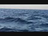 Bootje dolfijnen