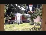 Hummingbird Neptune