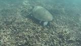 Zeeschildpad, zo mooi !!!!