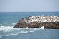 Vogel eiland