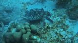 zeeschildpad op Bonaire