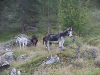 Park National de La Vanoise