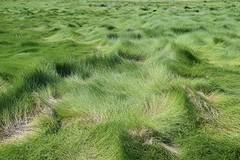 Glooiende grasvlakten