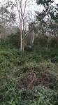 Neushoorn op 3 meter afstand